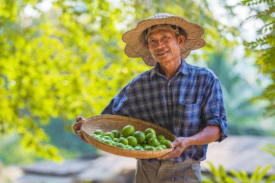 Asian man Senior Farmer with lemon green,Asian man farmer on empty copy space