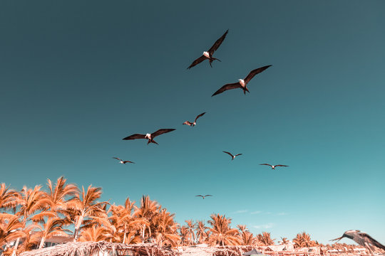 Low angle view of birds flying over beach