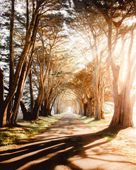 View of road passing through tree tunnel