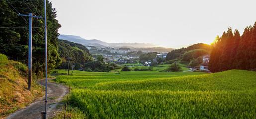 田舎の風景 朝 棚田