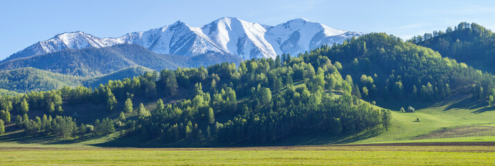 Wall Mural - Wide panoramic view, the beginning of summer in the mountains. Green forests and meadows, snow-capped peaks and blue sky. Altay mountains.