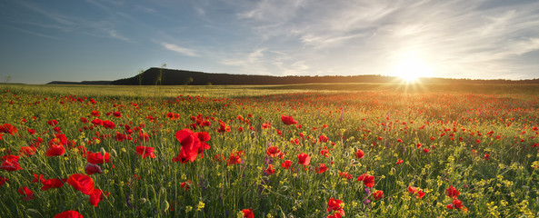 Wall Mural - Poppies meadow landscape.