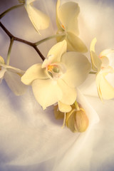 The branch of yellow orchids on white fabric background