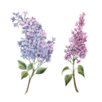 Beautiful watercolor floral set with pink lilac flowers. Stock illustration.