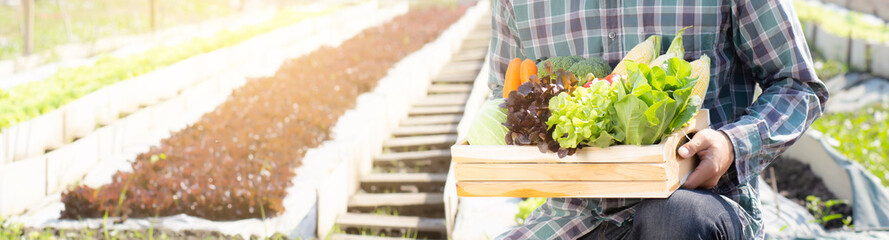 Young asian man harvest and picking up fresh organic vegetable kitchen garden in basket in the hydroponic farm, agriculture for healthy food and business concept, banner website. Papier Peint