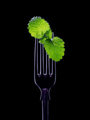 Table fork with a sprig of mint on a black background