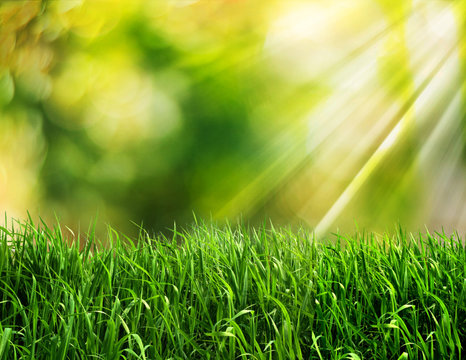 abstract spring background or summer background