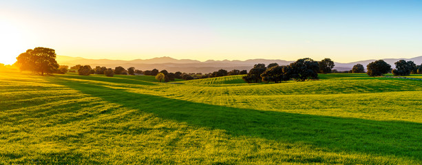 sunset over green field with sunlight, green grass, bush, trees, shadows and mountains in background Fototapete