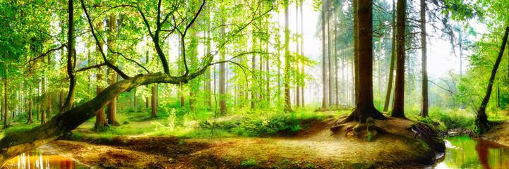 Fototapeten Lime grun Panorama vom Wald im Frühling mit heller Sonne, die durch die Bäume strahlt