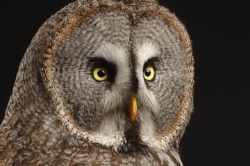 Foto auf Acrylglas Eulen cartoon great grey owl face with black background