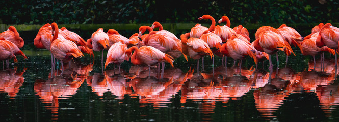 Poster Flamingo Wildlife photography