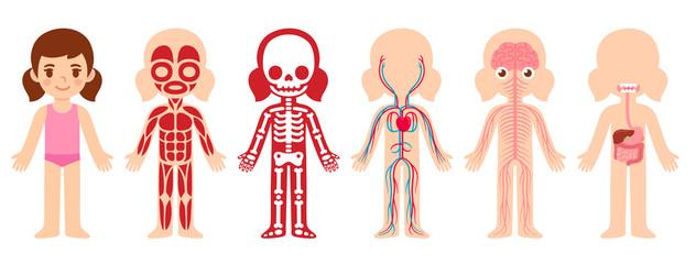 Anatomy cartoon girl illustration