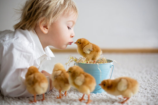 Cute sweet little blond child, toddler boy, playing with little chicks at home, baby chicks in child