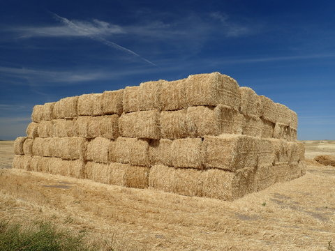 hay bales in the field in Idaho