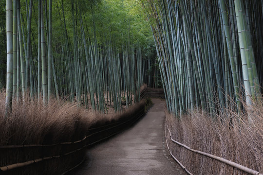 A rare, quiet sight of Arashiyama Bamboo Forest in Kyoto