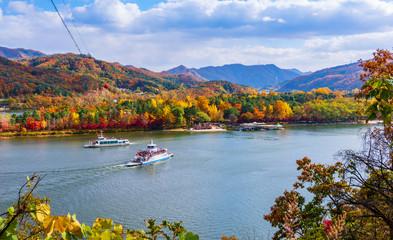 Autumn of Nami island in Seoul ,South Korea.