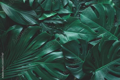 Wall mural closeup nature view of green monstera leaf and palms background. Flat lay, dark nature concept, tropical leaf