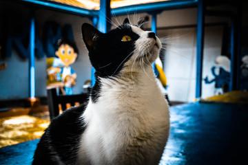Mascotas, animales, gatos, felino, peludos,  Wall mural