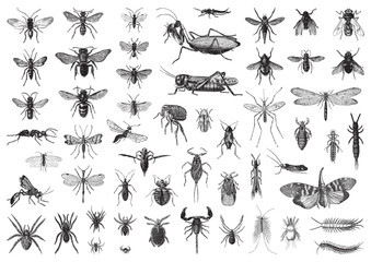Insects biodiversity collection / vintage illustration from Brockhaus Konversations-Lexikon 1908