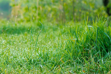 tall green grass close up. beautiful outdoor scenery on a sunny morning. freshness in nature concept