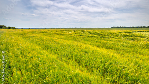 Fototapete Scenic view of Wheat Field and bright blue sky with cumulus and cirrus. Rural summer Landscape. Beauty nature, Agriculture and seasonal Harvest time. Cultivation cereals. Agribusiness.