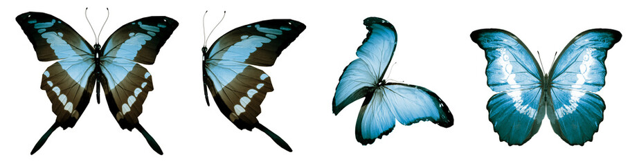 Color natural and watercolor butterflies , isolated on white background