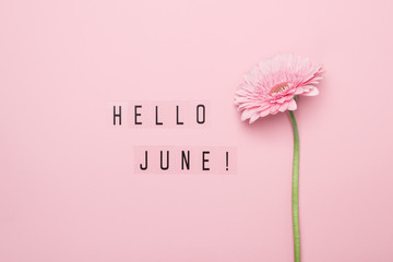 Tuinposter Gerbera Hello June text and pink gerbera flower on pink background. Hello June concept