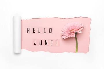 Hello June text and pink gerbera flower on pink background. Paper hole with torn edges. Hello June concept