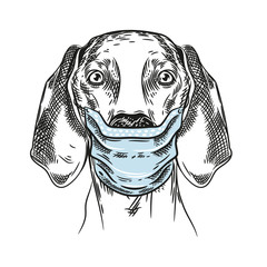 Vector image of a hunting dog. Dog in a medical mask.