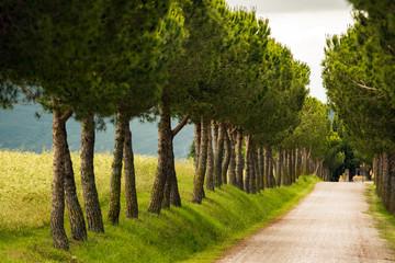 Toskania / Italia