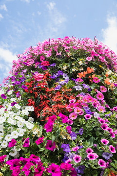 Springtime flowerbed of colorful petunias and begonias