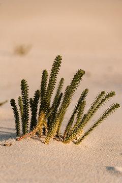 Little green plants growing among sand.