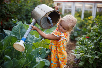Fototapeta girl child in the garden watering plants, a small gardener, summer in the village obraz