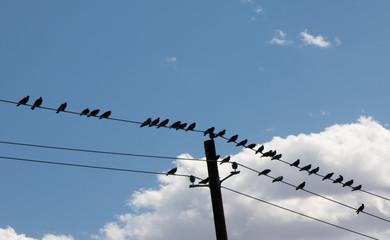 Like a Bird on  a Wire