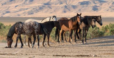 Wild herd of horses in field
