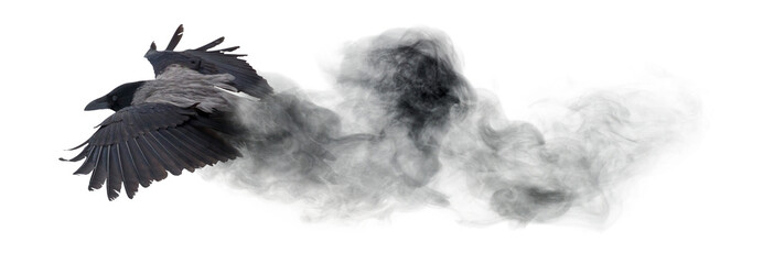 crow flying from dark smoke isolated on white