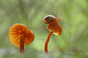 Snail and Fungus