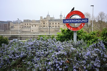 A pigeon on London underground sign near Tower of London