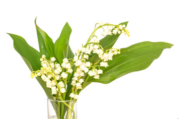 Wall Murals Lily of the valley Bouquet of Lily of the valley flower blossoms, isolated on white background. May 1st, Labor Day symbol