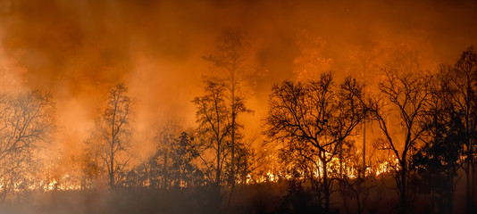 Rain forest fire disaster is burning caused by humans Fotomurales