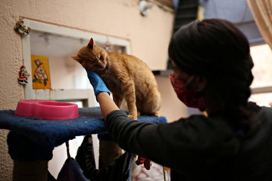 Tatiana Aguayo, animal rights activist, cuddles a cat in an animal shelter while wearing a face mask, amid the coronavirus disease (COVID-19) outbreak in Bogota
