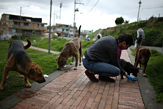 Tatiana Aguayo, an animal rights activist, feeds stray dogs wearing a face mask, amid the coronavirus disease (COVID-19) outbreak in Bogota