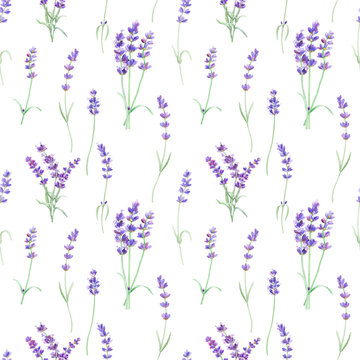 Watercolor pattern with lavender on isolated white background, watercolor hand drawing. Fabric wallpaper print texture. Stock illustration.