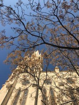 Arrivée du printemps dans les rues de l'Ecusson à Montpellier, nature et architecture (vers l'Eglise Saint-Anne)