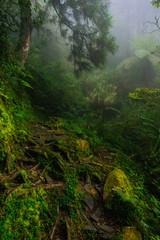 Door stickers Forest of Dadongshan Hiking Trail, Alishan, Chiayi, Taiwan