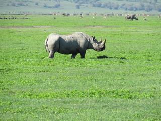 Poster Rhino Africa