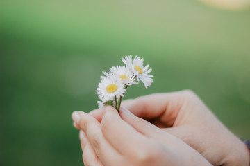 daisy in hands
