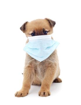 Dog in medical mask.