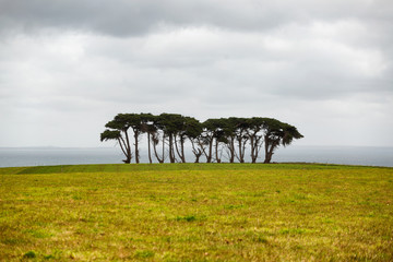 Row of windswept large and old trees on a headland Fotobehang