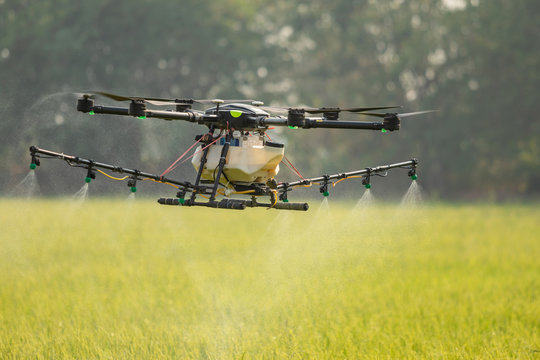 Agriculture drone flying over the rice field to sprayed chemical or fertilizer. Technology for agriculture concept